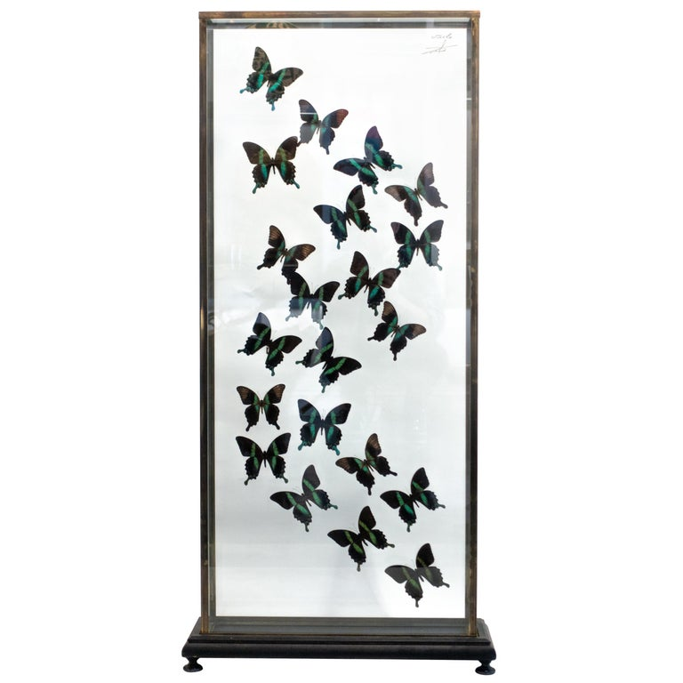 Butterflies in Flight Black and Green with Blue Tips Mounted For Sale