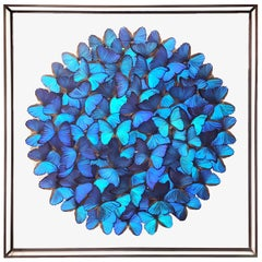 Butterflies Morphos Wall Decoration