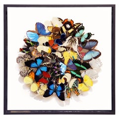 Butterflies Multicolors Medium Frame Wall Decoration