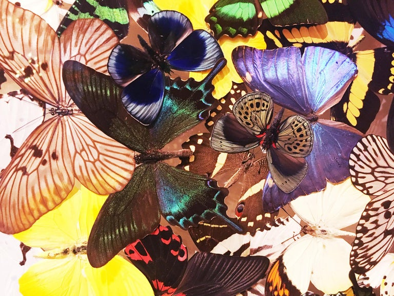 Butterflies Multi-Colors Wall Decoration For Sale 3