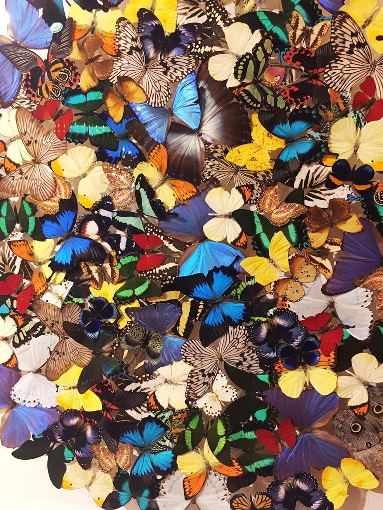French Butterflies Multi-Colors Wall Decoration For Sale