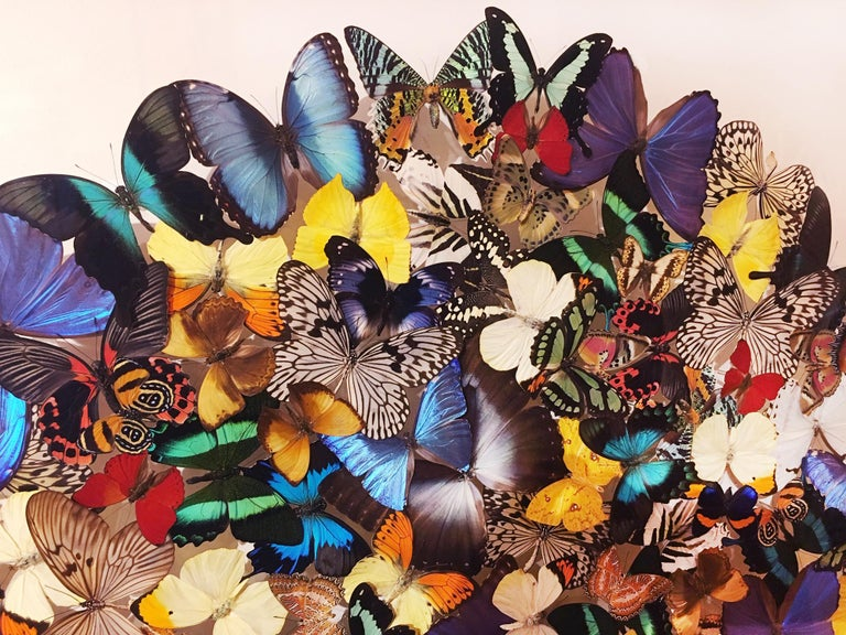 Butterflies Multi-Colors Wall Decoration In Excellent Condition For Sale In Paris, FR