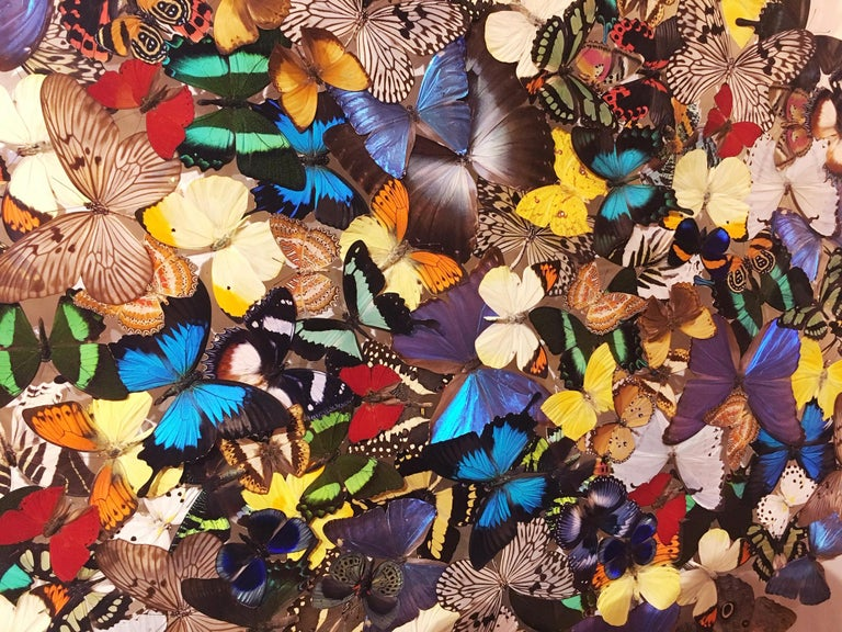 Contemporary Butterflies Multi-Colors Wall Decoration For Sale