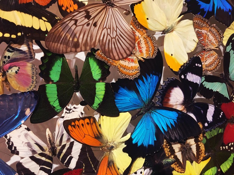 Butterflies Multi-Colors Wall Decoration For Sale 1