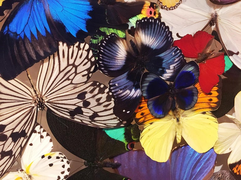 Butterflies Multi-Colors Wall Decoration For Sale 2