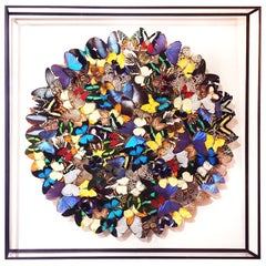 Butterflies Multicolors Wall Decoration