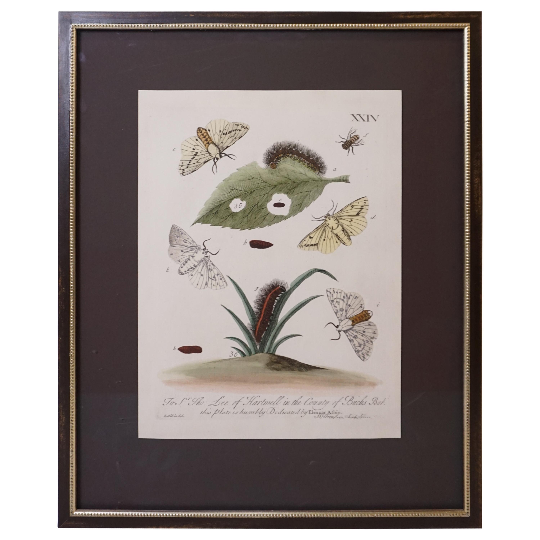 Butterfly Botanical Framed Print
