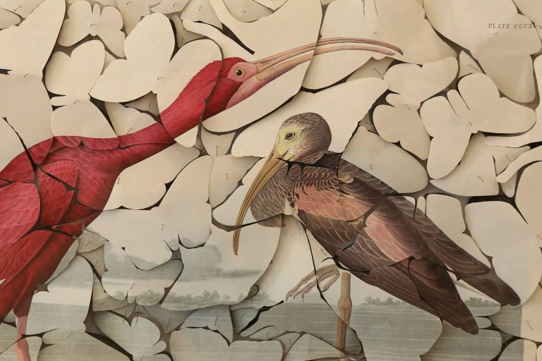 Butterfly Box Scarlet Ibis In Excellent Condition For Sale In Houston, TX