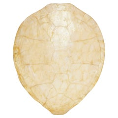 Capiz Turtle Shell Form