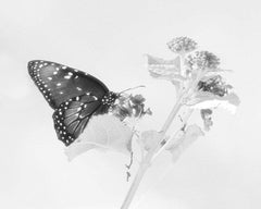 Butterfly and Flower #2