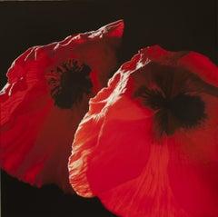Papavero rosso - Carlo Ferrari Oil Photorealistic Flower Painting on Canvas