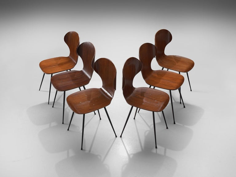Carlo Ratti for Industria Legni Curvati, Set of 6 dining chairs, plywood and metal, Italy, 1970s.  Elegant set of Italian dining chairs with metal frame and plywood seats. The seat features a wingback with remarkable curves. The curve seat is in