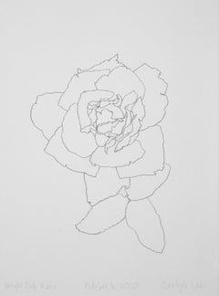 'Bright Pink Rose' - graphite botanical drawing - flower drawing - flora