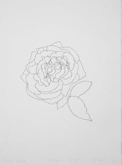 'Coral Rose' - graphite botanical drawing - flower drawing - flora