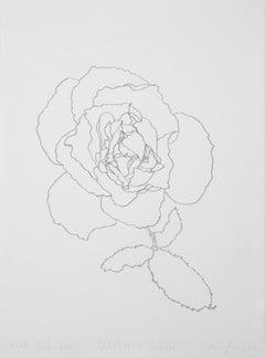 'Light Pink Rose' - graphite botanical drawing - flower drawing - flora