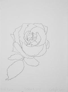 'Red Roses' - graphite botanical drawing - flower drawing- flora