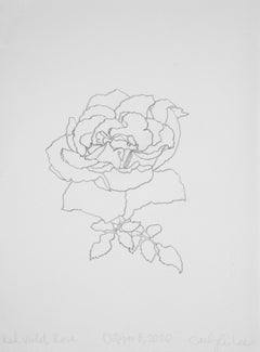 'Red Violet Rose' - graphite botanical drawing - flower drawing - flora