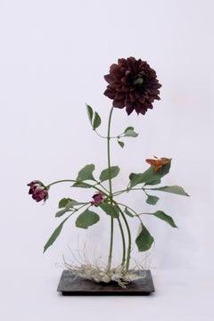 Dark Dahlia with Orange Moth