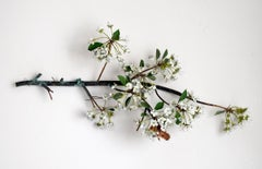 Hanging Pear Blossom Branch with Linnaeus Moth
