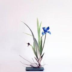 Iris with Brown Snail