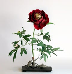 Red Peony with Anthrocharis Butterfly