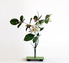 White Camellia with Green Kaytid