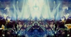 Narcissus - Contemporary, Polaroid, 21st Century, Flora, Color