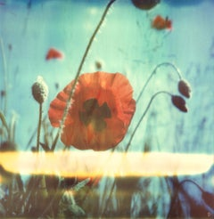 New Poppy #01 [From the series Wild Things]