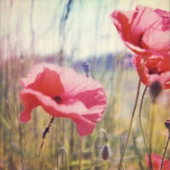 Poppy Realm #01 Contemporary, Landscape, flower, Polaroid, Photograph, expired