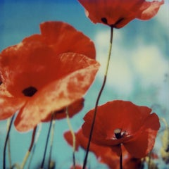 Poppy Realm #01 [From the series Wild Things]