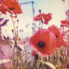 Poppy Realm #02 [From the series Wild Things]