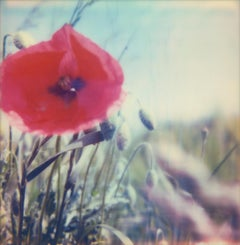Poppy Realm #03 [From the series Wild Things]
