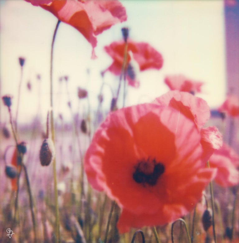 Poppy Realm #04 [From the series Wild Things] 1