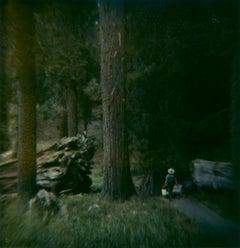 Sequoia #121 (US Road trip Diary) - Polaroid, Landscape, US, Color
