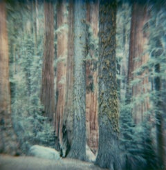 Sequoia #125 (US Road trip Diary) - Polaroid, Landscape, US, Color