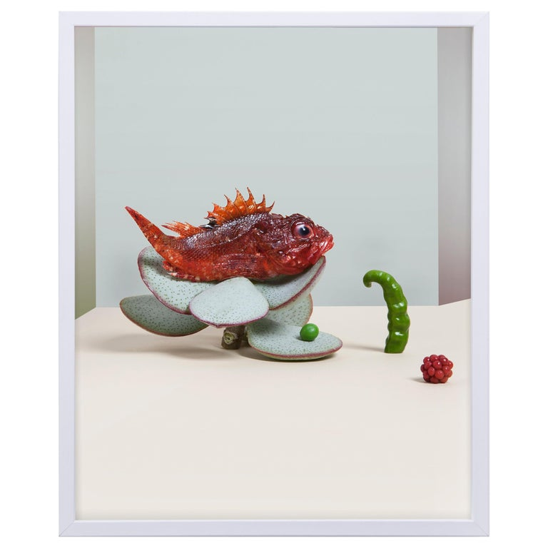 Carmen Mitrotta Dead Food for New World Photo Nr. 15 For Sale