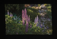 """Lupines"", Contemporary, Framed, Embroidery, Photorealism, Nature, Landscape"