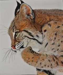 Lynxy