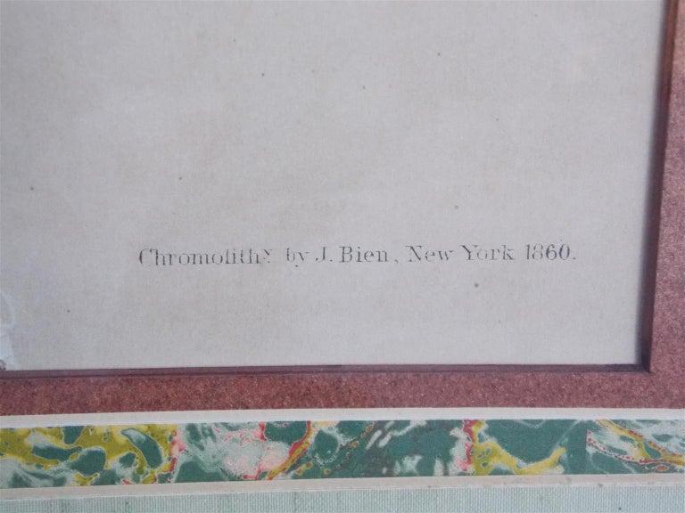 Carolina Parrot by John J . Audubon Chromolith J. Bien, NY Circa 1860 Plate 278 2