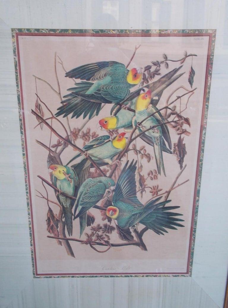 Hand-Carved Carolina Parrot by John J . Audubon Chromolith J. Bien, NY Circa 1860 Plate 278