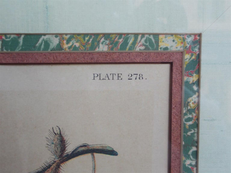 Carolina Parrot by John J . Audubon Chromolith J. Bien, NY Circa 1860 Plate 278 In Excellent Condition In Charleston, SC