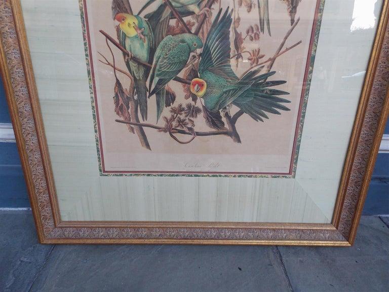 Mid-19th Century Carolina Parrot by John J . Audubon Chromolith J. Bien, NY Circa 1860 Plate 278