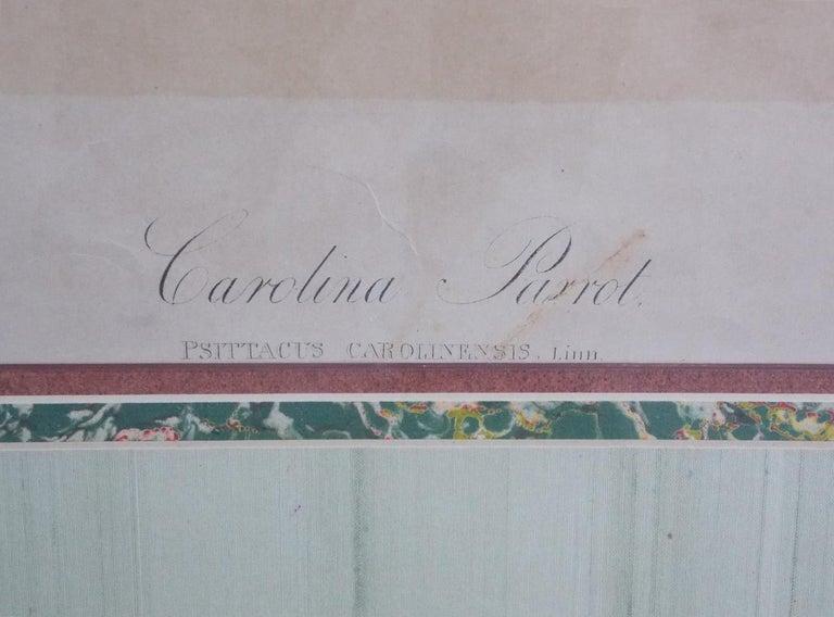 Glass Carolina Parrot by John J . Audubon Chromolith J. Bien, NY Circa 1860 Plate 278