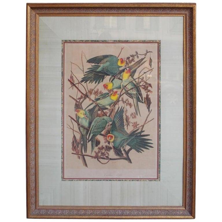 Carolina Parrot by John J . Audubon Chromolith J. Bien, NY Circa 1860 Plate 278