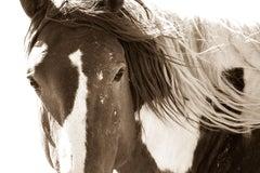 Painted Stallion