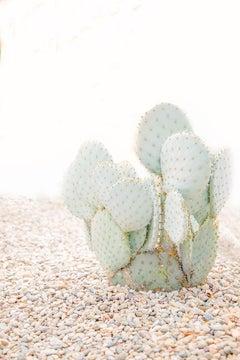 """Cacti Corner,"" Contemporary Botanical Photograph, 60"" x 40"""