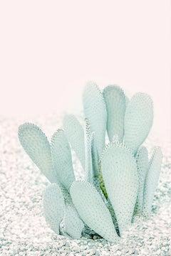 """""""Pink Cacti,"""" Contemporary Botanical Photograph, 60"""" x 40"""""""