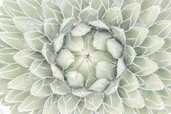 """Succulent Close Up 2,"" Contemporary Botanical Photograph, 30"" x 45"""