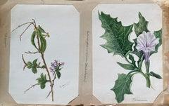 2 x Fine Antique British Botannical Watercolour Painting, circa 1900's