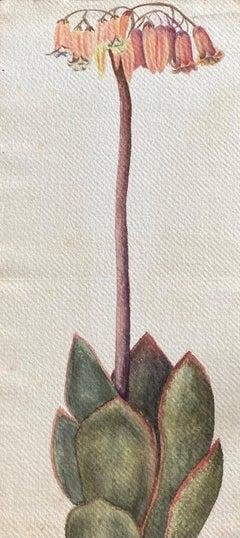 Fine Antique British Botannical Flower Watercolour Painting, circa 1900's